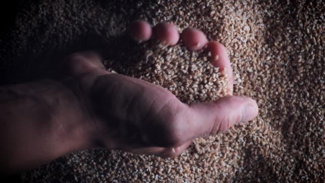 4k Grains Background, Man Hand Taking Wheat Groats video
