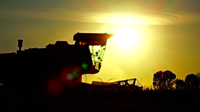 4k Harvesting at sunset - Stock Video. Combine collecting the crops. Sony FDR AX-100 shoot