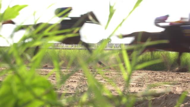 4 k at yarışı gerçek zamanlı - horse racing stok videoları ve detay görüntü çekimi