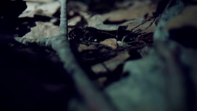 乾燥した葉を通した4k マクロバグアイビュー - 中林大樹点の映像素材/bロール