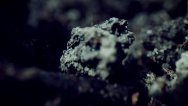 乾燥土壌による4k マクロバグアイビュー - 中林大樹点の映像素材/bロール