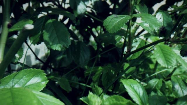 植物や葉を通して4k マクロバグアイビュー - 中林大樹点の映像素材/bロール