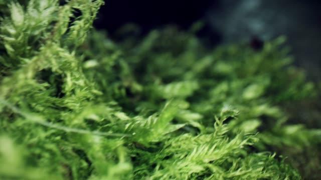 植物を通して4k マクロバグアイビュー - 中林大樹点の映像素材/bロール