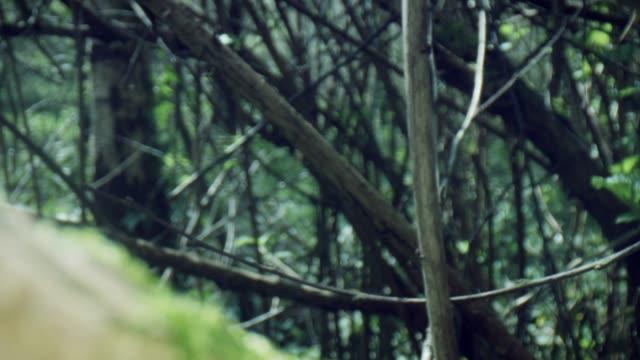 木や茂みを通して4k マクロバグアイビュー - 中林大樹点の映像素材/bロール