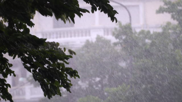 4k of heavy rainy day with tree background. - pioggia torrenziale video stock e b–roll