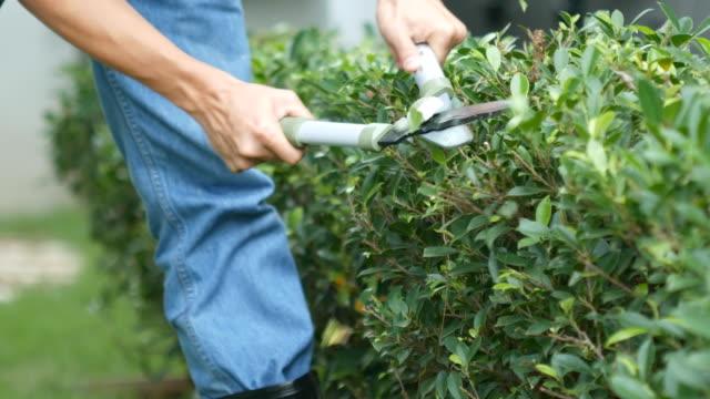 4k of Professional gardener pruning an hedge video