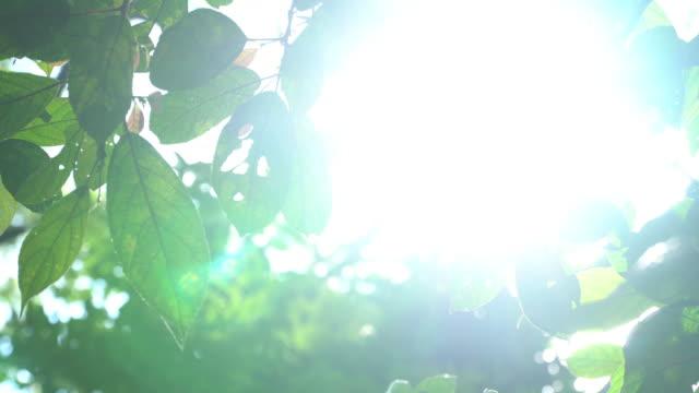 日光の梢を通って落下の 4 k。 - 木漏れ日点の映像素材/bロール