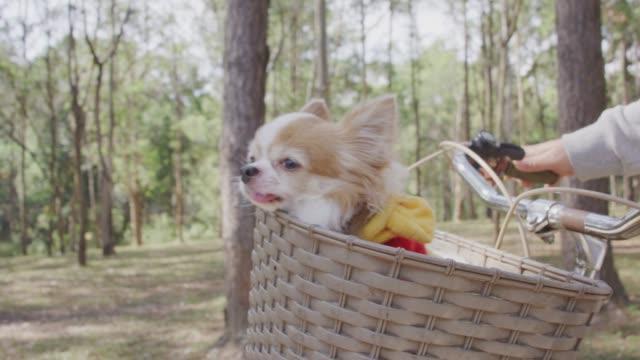 4 k-Slo-Mo, Chihuahua Hund im Korb mit Fahrrad – Video