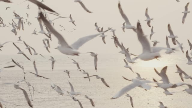 4k slo mo , Large group of Seagulls flying over the sea shot on RED dragon group of animals stock videos & royalty-free footage