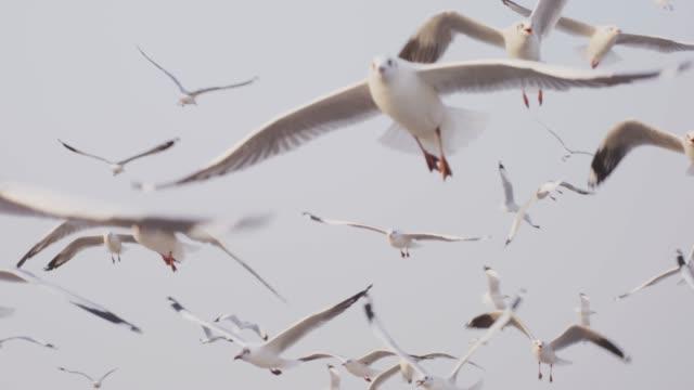 4k slo mo , seagulls flying in sunset