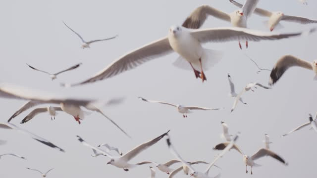 4k slo mo , seagulls flying in sunset shot on RED dragon seagull stock videos & royalty-free footage