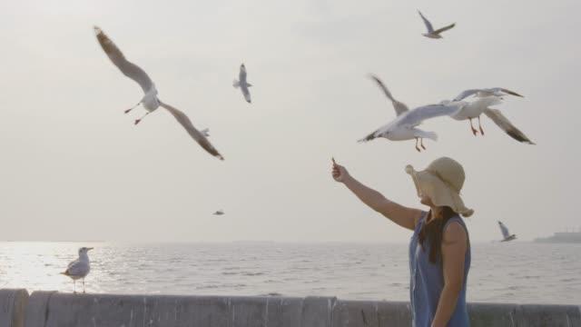4k slo mo , Women feeding Seagulls
