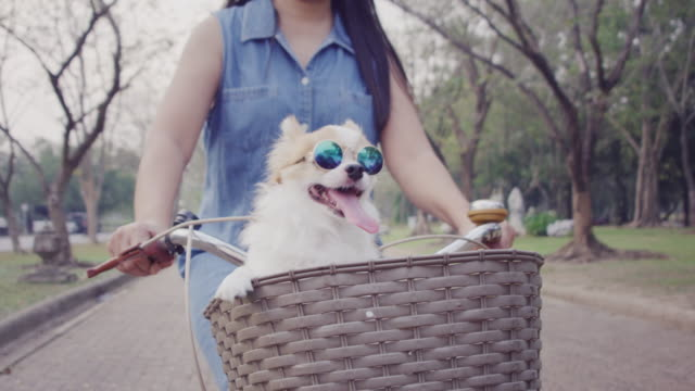 4k slo mo ,women riding bicycle with little dog in basket shot on RED dragon mammal stock videos & royalty-free footage