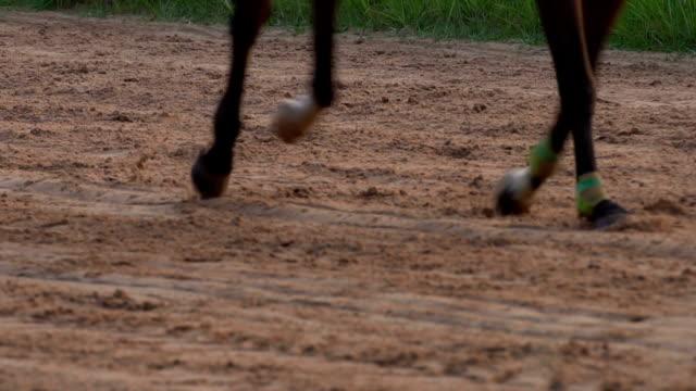 4k slow motion galopp förlora en - racehorse track bildbanksvideor och videomaterial från bakom kulisserna