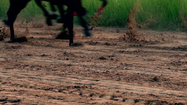 4 k zeitlupe horse racing - pferderennen stock-videos und b-roll-filmmaterial