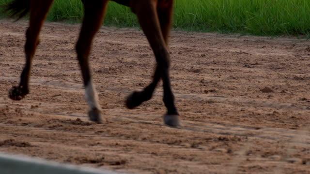 4 k slow motion hästen springa - racehorse track bildbanksvideor och videomaterial från bakom kulisserna