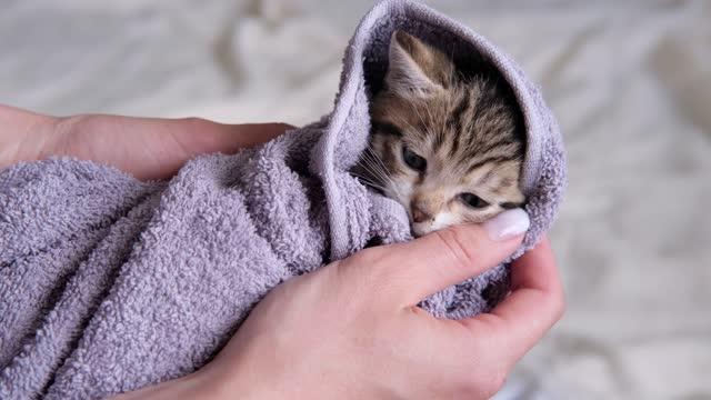 4k randig tabby kattunge i handduk somnar efter att ha tagit bad. rena husdjur. kvinna händer torkar söt katt efter tvätt - kattunge bildbanksvideor och videomaterial från bakom kulisserna