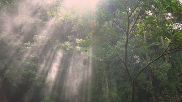 4k, sunlight through trees with spray from waterfall. - trees in mist stock videos & royalty-free footage