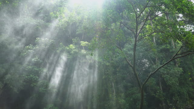 4k, Sunlight through trees with spray from waterfall. video