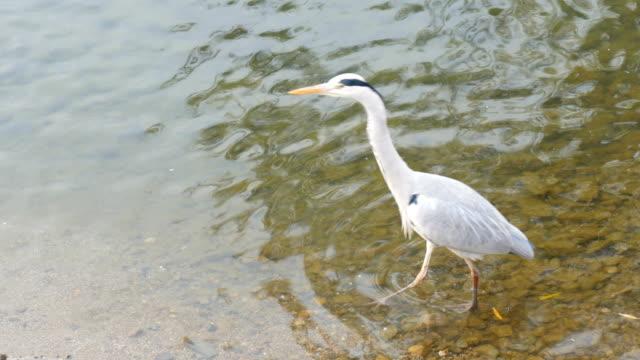 4 k: 白鳥の湖に浮かぶ - 里山点の映像素材/bロール