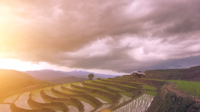 4k Time-lapse of step rice paddy and cloudy in Thailand video