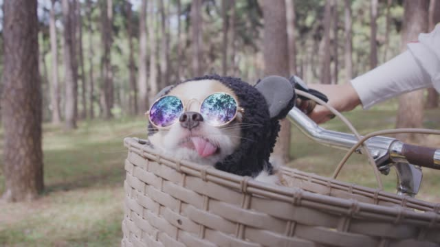 4k tracking cute little dog with sunglasses on bicycle basket - cestino della bicicletta video stock e b–roll