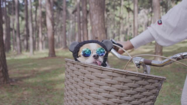 4k tracking cute little dog with sunglasses on bicycle basket