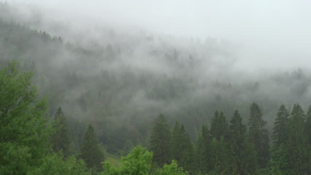 4k : tree fog over mountains - trees in mist stock videos & royalty-free footage