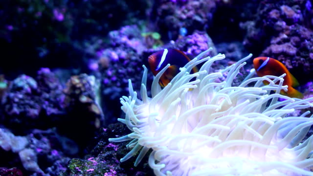4k Tropical Fish 4k Tropical Fish reef stock videos & royalty-free footage
