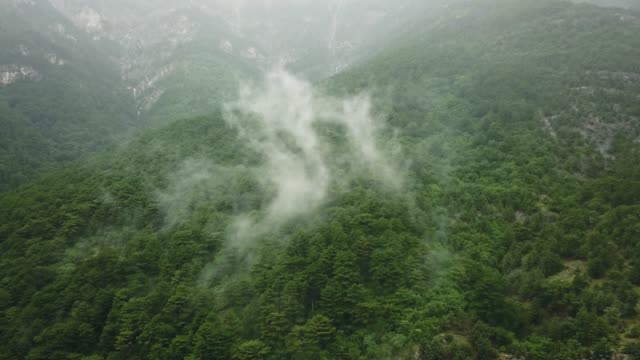 4k uhd footage flying above the rainforest into the rainy  clouds on a stormy day - albero tropicale video stock e b–roll