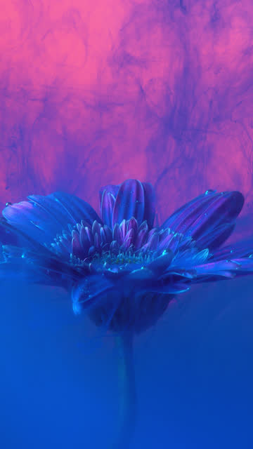 4k Vertical Blue ink and daisy flower in water.