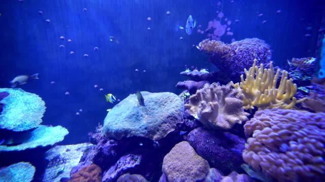 4 k 錄影的水族館裡游泳的魚影片