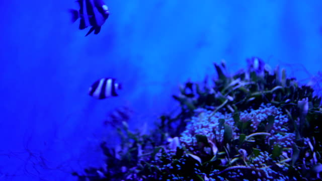 4k video footage of fish swimming in an aquarium video