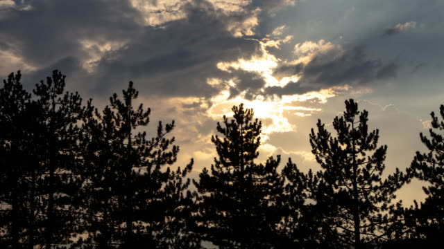 4k video of pine trees and clouds time lapse - conifera video stock e b–roll