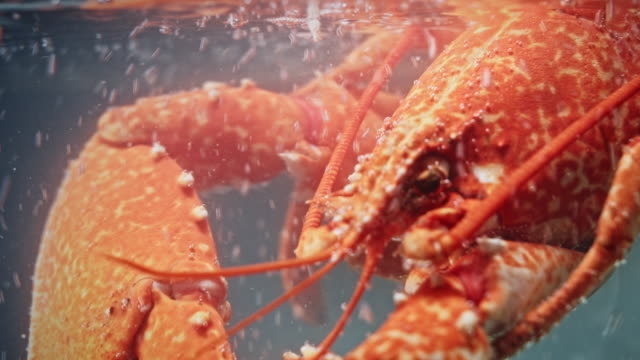 4k Water Boiling in Glass Pot with Lobster video
