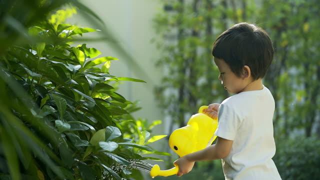 4 K  :   joli petit garçon eau sur l'arbre. - Vidéo