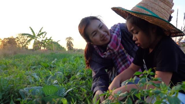 4k:mother and daughter working in vegetable garden - tajlandia filmów i materiałów b-roll