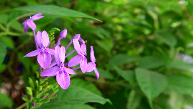 4K,Purple flower on bloom with green left background