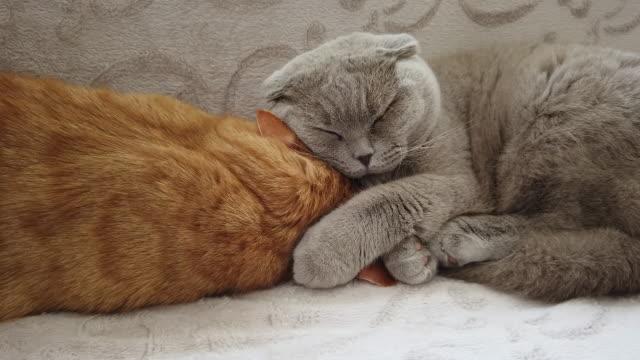 4K:Sleeping Cute Cats