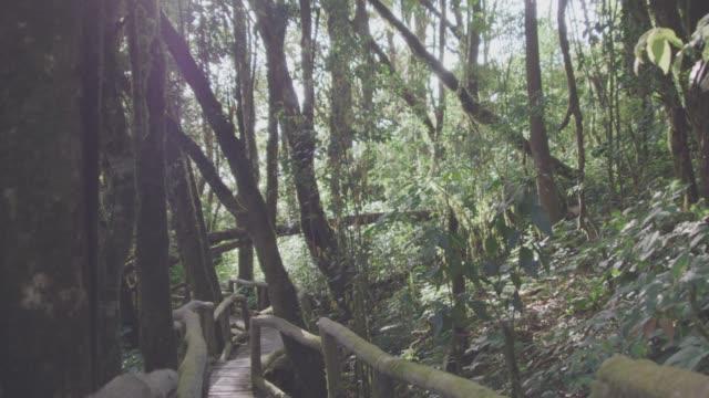 4k,Walk along a forest trail видео