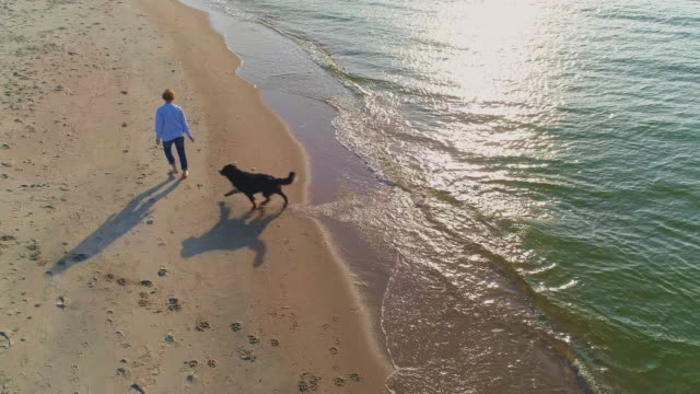 55-years-old mature active, attractive woman playing with her big dog, Zennenhund, on a sand beach of the Baltic Sea in the sunny autumn day. Aerial high-angle 4K UHD video footage.