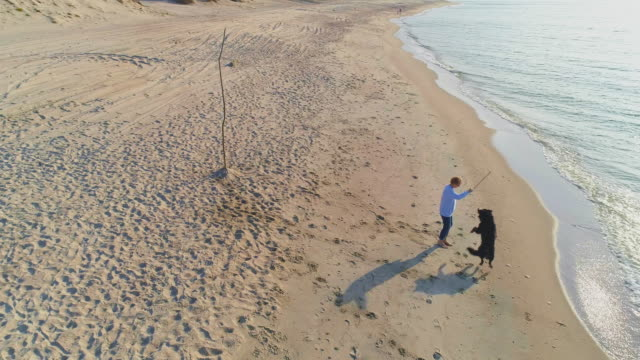 55-years-old mature active, attractive woman playing with her big dog, Zennenhund, on a sand beach of the Baltic Sea in the sunny autumn day. The dog jumping for a stick. Aerial high-angle 4K UHD video footage.