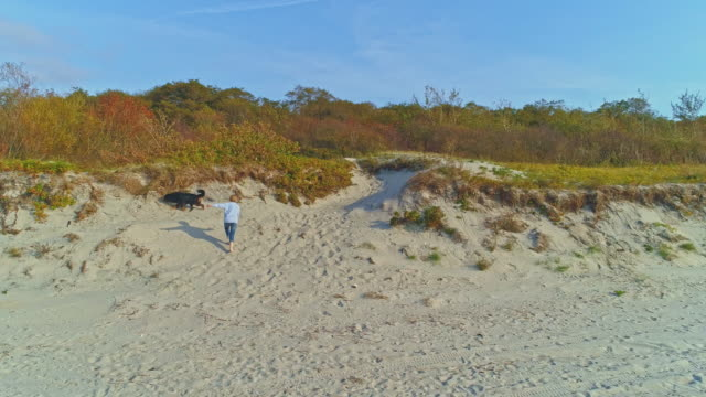 55-years-old mature active, attractive woman walking her big dog, Zennenhund, on sand dunes of the Baltic Sea in the sunny autumn day. Aerial high-angle 4K UHD video footage.