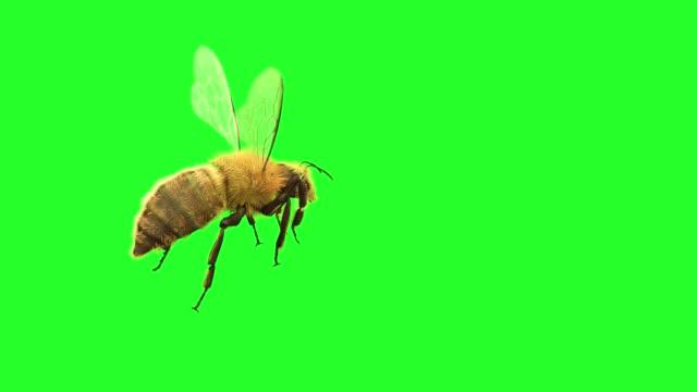 a bee is flying on a green background, 3d render - pszczoła filmów i materiałów b-roll