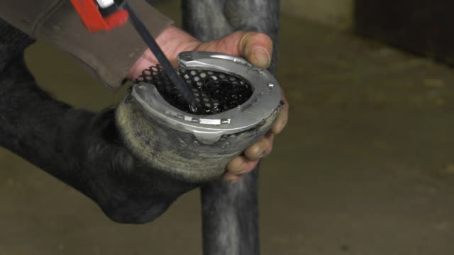 a craftsman farrier replace horseshoes - horseshoe stock videos & royalty-free footage
