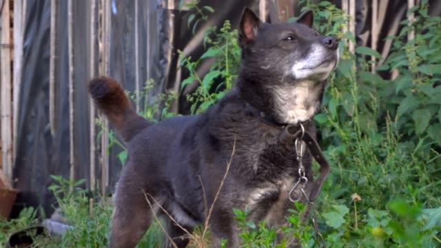 ein hund ist schnüffeln, was ist in der umgebung - duftend stock-videos und b-roll-filmmaterial