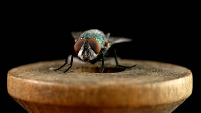 a fly sits on a wooden spool of thread