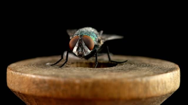 bir sinek iş parçacığı bir ahşap makara üzerinde oturur - sinek stok videoları ve detay görüntü çekimi