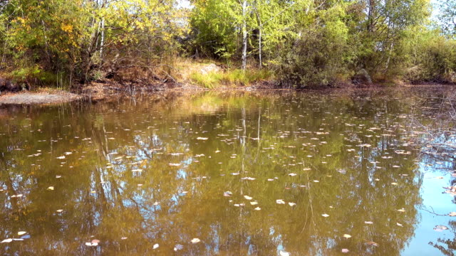 a Forest Lake in The Autumn Day video