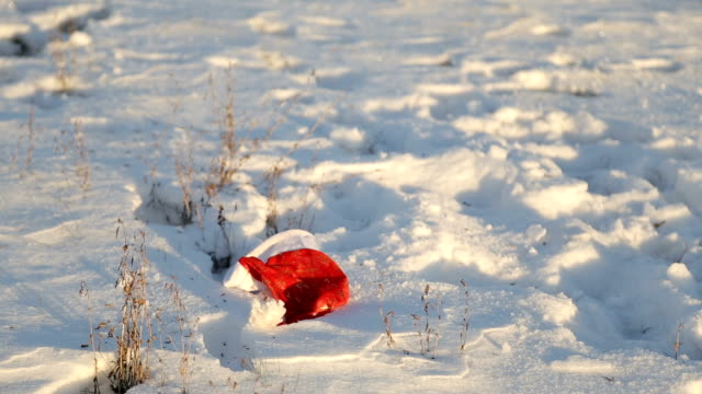 a golden retriever dog picks up a red cap from the snow video